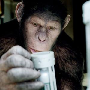 apes300.jpg