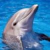 bottlenose-dolphin-2.jpg