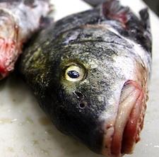 deadfish_225.jpg
