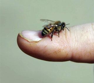 beekeeper1.jpg