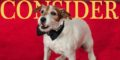 Consider Uggie, Day 153: Artist Wonder Dog Attends White House Correspondents' Dinner, Gets Book Deal