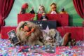 Finally, The Muppets Get a Star on the Hollywood Walk of Fame