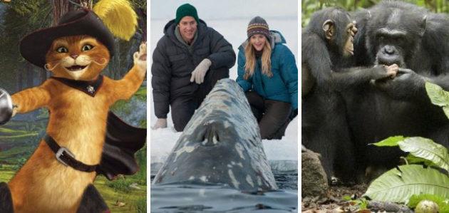 5 Types of Animal Movies
