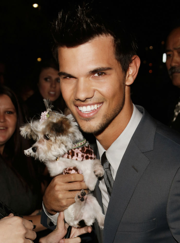 Taylor Lautner puppy